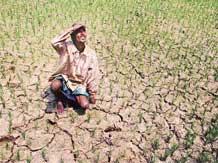india suicide farmers